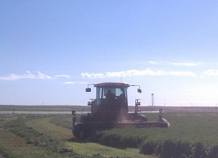 Alfalfa harvest in New Mexico for Anderson Hay