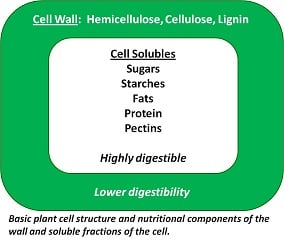 Basic Plant Cell Structure