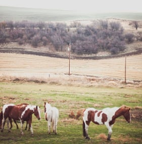 Horses turned out into pasture