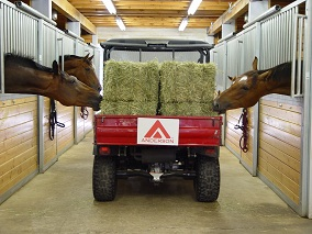 Timothy Hay for Horses by Anderson Hay