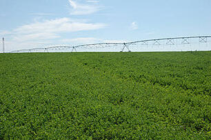 Alfalfa Hay for Horses from Anderson Hay