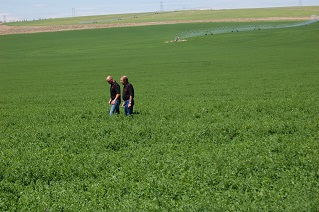 Alfalfa Field with Mark T Anderson and Ron T Anderson