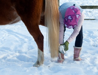 winter hoof care