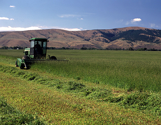 Timothy Hay Kittitas Valley Swathing