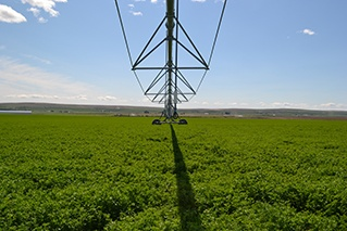 Kittitas_Valley_Alfalfa_1st_cutting_harvest_anderson_hay