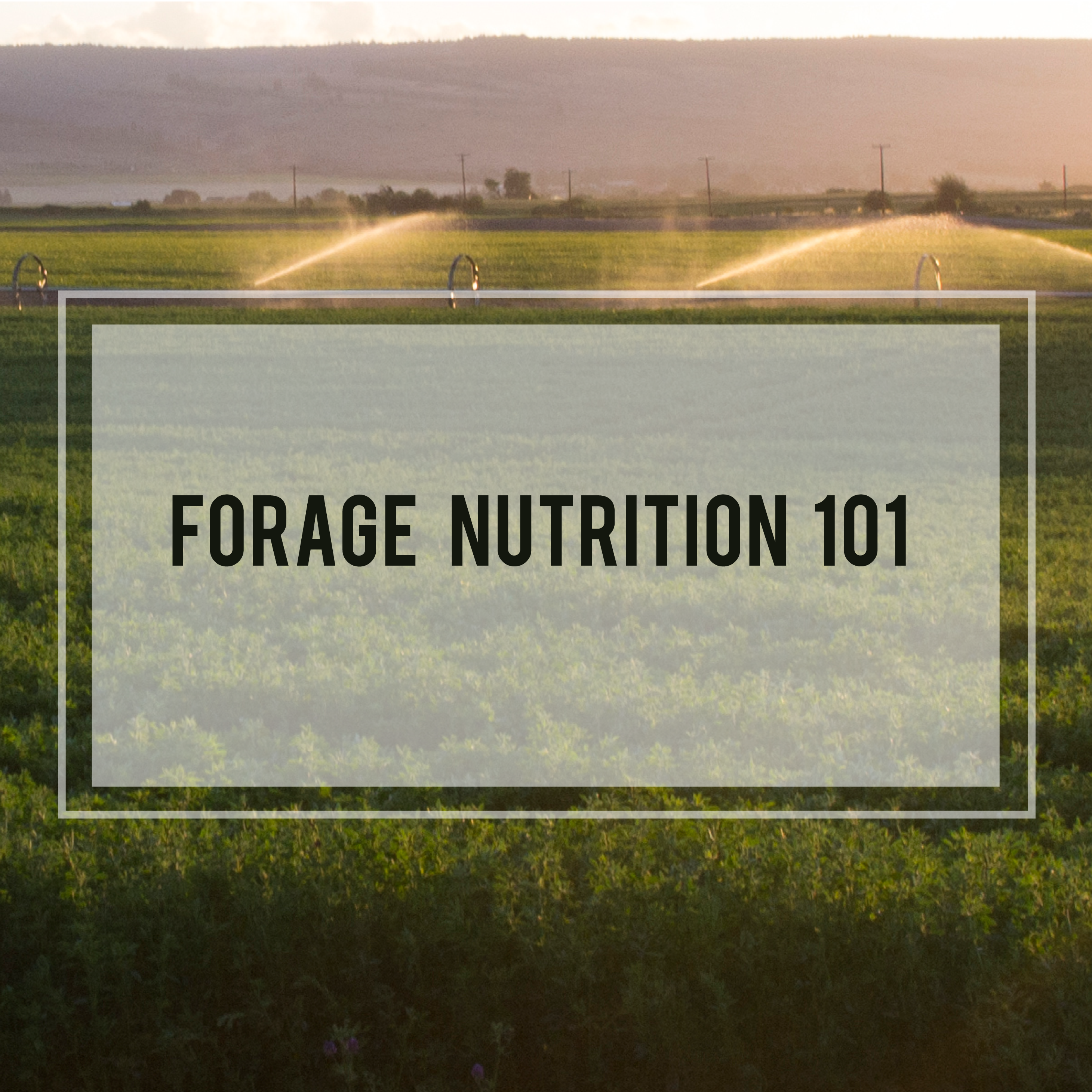 Forage Nutrition 101: Nitrates