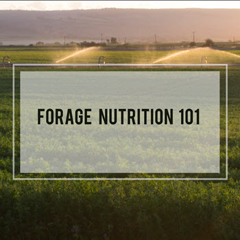 Forage Nutrition 101: Phosphorus